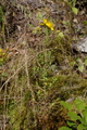 Schlitz Eisenberg LPA 329191 Rohrwiesenbachtal und Eisenberg Hypericum perforatum.png