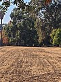 Scully Ranch--street view (head on) of house (behind mature grove of greenery).jpg