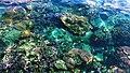 Sea Heritage (3).jpg