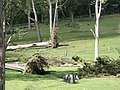 Seaham trees down16 - Flickr - Macleay Grass Man.jpg