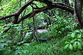 Seat-tree-forest-waterfall - West Virginia - ForestWander.jpg