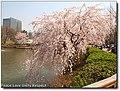 Seoultech lake.jpg