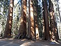 Sequoia Parker Group P4260947.jpg