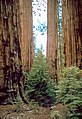 Sequoia and Kings Canyon National Parks SEKI4517.jpg
