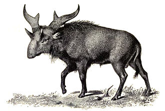 Sivatherium - Outdated, moose-like restoration