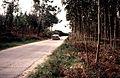 Slide - 03-87 Agfa Rally Portugal 1987 Montejunto - 035 (22980795529).jpg