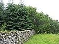 Small conifer plantation - geograph.org.uk - 518354.jpg