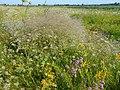 Smilyans'kyi district, Cherkas'ka oblast, Ukraine - panoramio (110).jpg