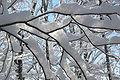 Snowrib branches 04.jpg