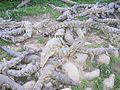 SouthAfrica CrocodileFarm.JPG