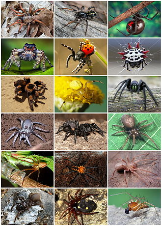Spider - An assortment of different spiders.