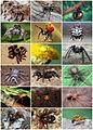 Spiders Diversity.jpg