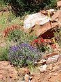 Spring Wildflowers (5699163291).jpg