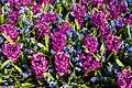 Spring in Holland (32658618337).jpg