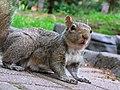 Squirrel1 (150800030).jpg