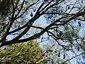 Sri Lanka Photo118.jpg