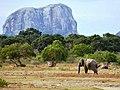 Sri lanka elephants.jpg