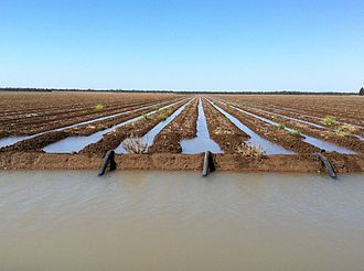 Siphon - Siphon irrigation of cotton at St George, Queensland.
