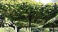 Stadtfriedhof Celle Laubengarten 7957.jpg