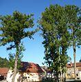 Stadtzentrum von Stübig - panoramio (2).jpg