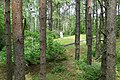 Stand of Trees with Mass Gravesite and Marker - Rumbula Forest Holocaust Site - Riga - Latvia.jpg