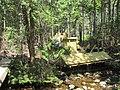 Stanley Brook image five.jpg
