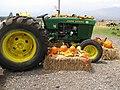 Starr-111004-0563-Cucurbita pepo-habit with pumpkin and tractor display-Kula Country Farms-Maui (24487687404).jpg