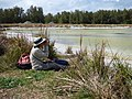 Starr-150401-0379-Paspalum urvillei-Kim looking at birds-Water Catchment Sand Island-Midway Atoll (24905096759).jpg