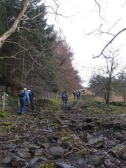 Steep climb through the woods near Llangattock - geograph.org.uk - 1765270