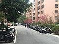 Students Walking through Cherry Blossom in Lane 74, Sanmin Road Taipei 20160307.JPG