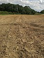 Sub-surface cultivation near Broomsthorpe - geograph.org.uk - 526516.jpg
