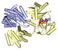 Succinyl-CoA synthetase 2fp4.png