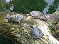 Suisse zoo (42).jpg