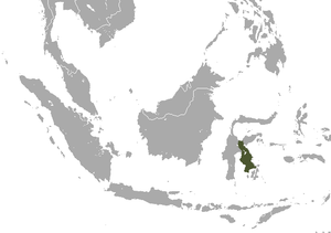 Sulawesi Tiny Shrew area.png