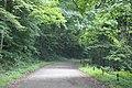 Summer heat on Honan ave community hiking and biking trail - panoramio (8).jpg