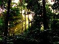 Sunrise at Koraput forest silhouette.jpg