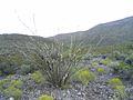 Sunrise in Alamogordo - panoramio.jpg