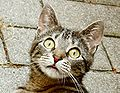 Surprised young cat.JPG
