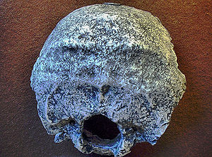 Homo heidelbergensis - The Swanscombe-skull (reconstruction)