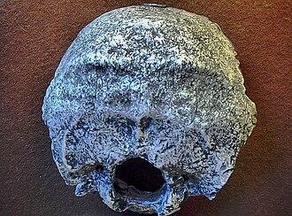 Swanscombe - Backside of the Swanscombe-skull (replica)