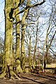 Swing in the Copse, St.Catherine's Hill - geograph.org.uk - 1736653.jpg