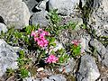 Swiss National Park 021.JPG