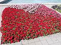 Szent István Park. Flower bed, red. - Budapest.JPG