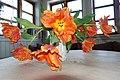 TULIPS orange (red yellow) open flower petals, in vase on table, flash (oransje, åpne tulipaner i vase på bord, blitslys) Norway 2019-02-13 3.jpg