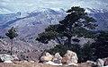 Taşeli-Plateau 09 04 1984 Belpınarı Beli 1890 m.jpg