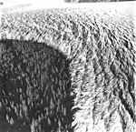 Taku Glacier, advancing edge of tidewater glacier, September 1, 1977 (GLACIERS 6255).jpg