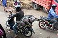 Tana Toraja, Pasar Bolu, pig on motorbike (6823360892).jpg