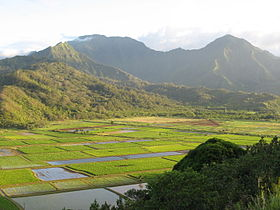 Taro fields.JPG