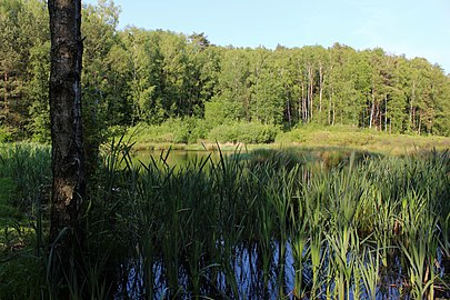 Teich der Fischbeker Heide.jpg