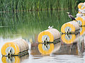 Tern on bouy (14161491498).jpg